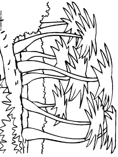coloring book pages palm tree palm tree coloring pages for kids free printable palm