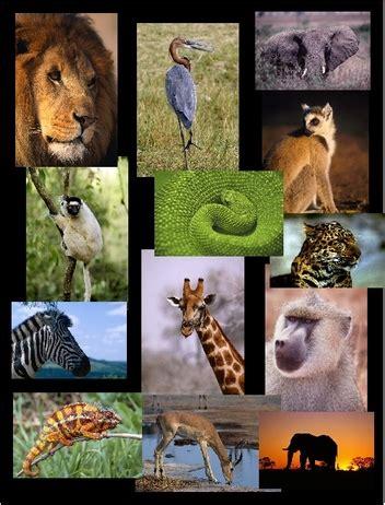 animalia creatures great  small