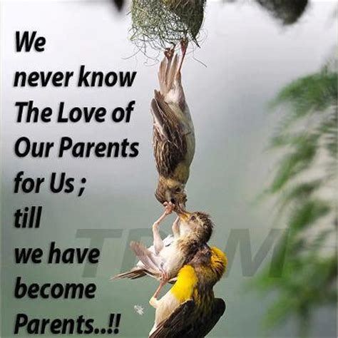 images of love of parents love of parents inspirational pictures quotes