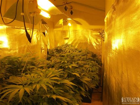 Grow Room by 3x400 Grow Room Design By Lemonjack420 Images Frompo