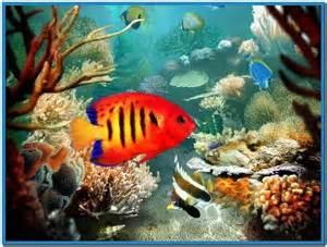 3d aquarium screensaver for mobile   Download free