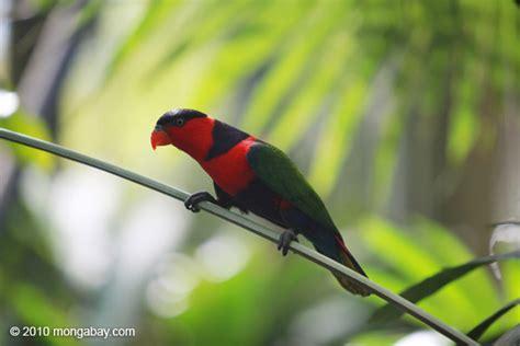 kumpulan gambar burung nuri yang sangat cantik cintakata