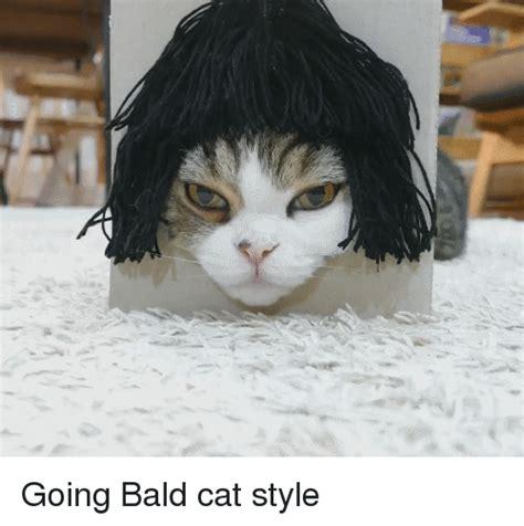 in what episode cat goes bald 25 best memes about bald cat bald cat memes