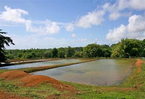 jardin d eau de blonzac goyave guadeloupe tourisme
