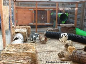 Rabbit Cages And Hutches Rabbit Accommodation Housing Ideas For Bunny Rabbits