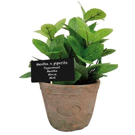 menta in vaso finta pianta di menta in vaso misura l arttedah004 html