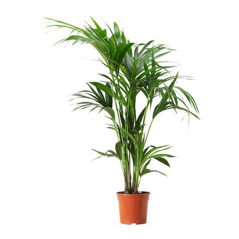 ikea outdoor plants indoor outdoor plants ikea ireland dublin