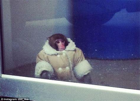 Monkey Jesus Meme - ikea monkey to stay in primate sanctuary while bitter