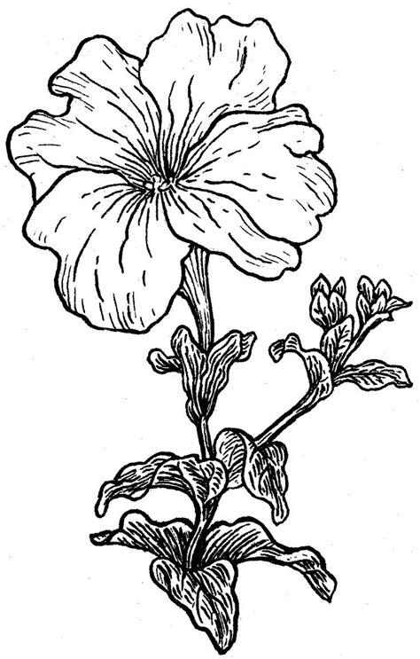 petunia tattoo designs 25 best ideas about petunia on cancer