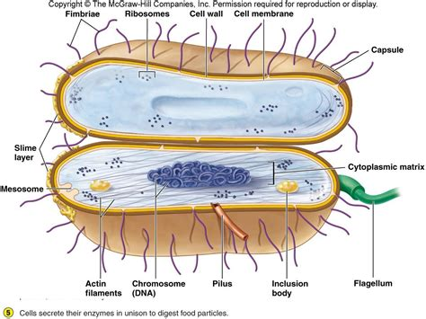 diagram of bacterial cell structure microbiology concepts morphology of bacteria part i