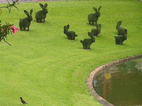 topiary rabbit rabbit topiary my yard