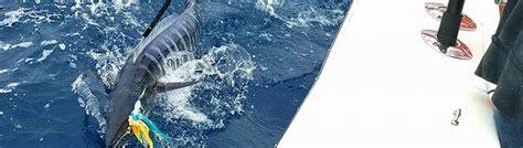gulf stream fishing myrtle beach fishing charters