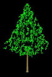 pohon  autocad mollucas design