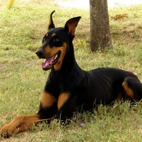 names for big dogs big names 100 names for males and females