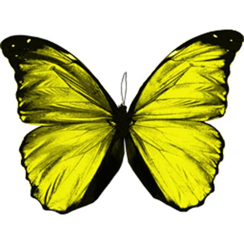 butterfly series  transparent png icon