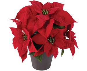 Twelfth Night Decorations Bloom Extra Large Potted Poinsettia Arrangement Christmas
