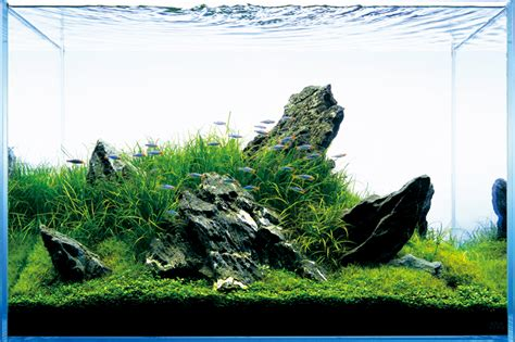 aquascape nature aquarium style t a g