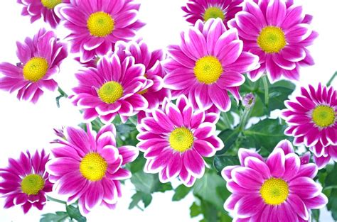 images of flowers free illustration flowers flower plants nature free