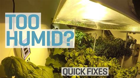 how to raise humidity in grow room humid in your grow room