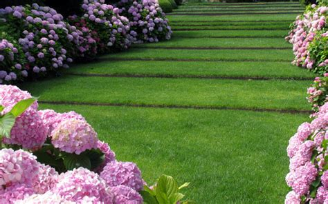 imagenes de jardines con hortensias m 243 nica mart 237 paisajismo jardines