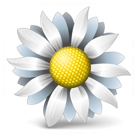 Facts About Daisy Flowers by Iconexperience 187 V Collection 187 Flower White Icon