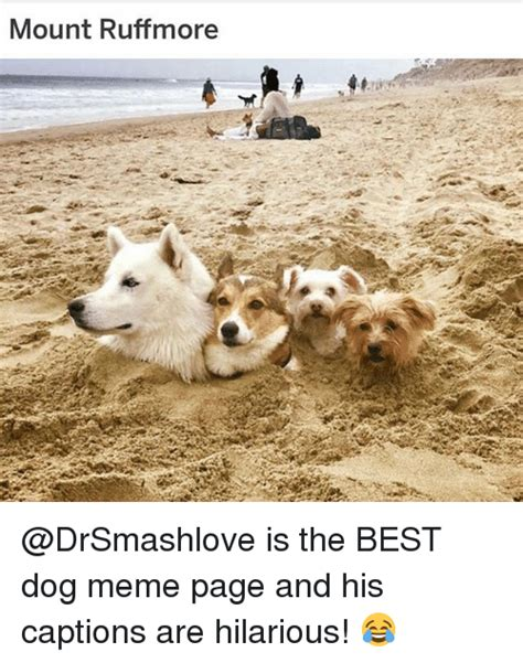 T Dog Meme - 25 best memes about dog meme dog memes