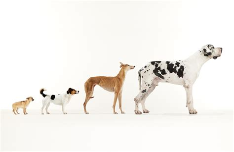 origin of dogs the history of how dogs were domesticated