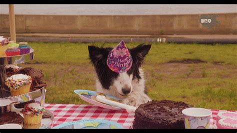 happy birthday puppy gif gif find on giphy