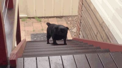 pug running up stairs 17 things no one told you about working out the warm up