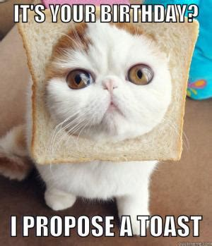 Cat Toast Meme - bread jokes kappit