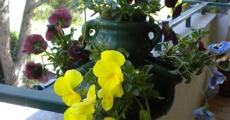fiori sul terrazzo magliamagia primi fiori sul terrazzo