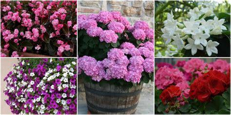 fiori da balcone estivi fiori da balcone creare uno spazio green roba da donne