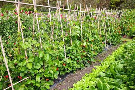 Easy Vegetable Garden by 5 Simple Vegetable Garden Design Ideas For All Seasons