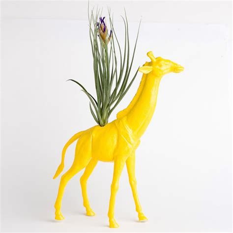 Giraffe Planter by Giraffe Planter With Air Plant Room Decor College By