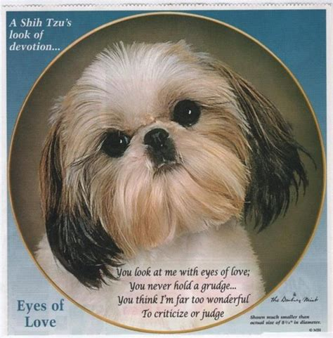 shih tzu breathing aid