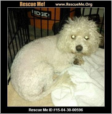 havanese rescue arizona 1000 images about found dogs az on 1 year id and
