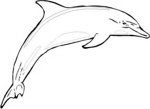 Dolphin Coloring Pages Images &amp Pictures  Findpik sketch template