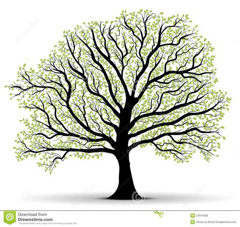 Tree Outline Green by Tree Of Outline Clipart Clipart Suggest