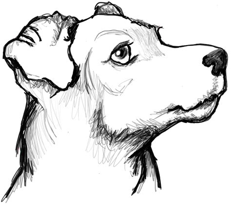How to Draw a Terrier's Face / Dog's Face with Easy Steps ... Easy Dog Face Drawing