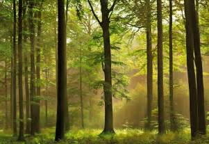 Nature Scene Wall Murals World Visits Green Forest Best Wallpapers Images