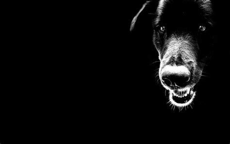 june 2012 dogs wallpapers backgrounds wild black dog desktop wallpapers backgrounds dogs