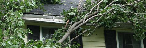 home insurance and fallen trees fallen trees insurance coverage safeco blog