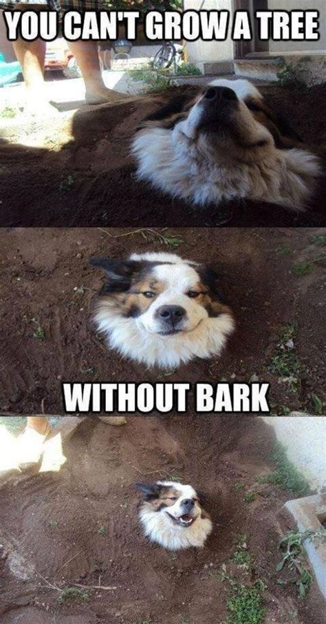 that can t bark you can t grow a tree without bark