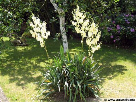 Cactus Planter by Yucca Filamenteux Yucca Filamentosa Conseils De Culture