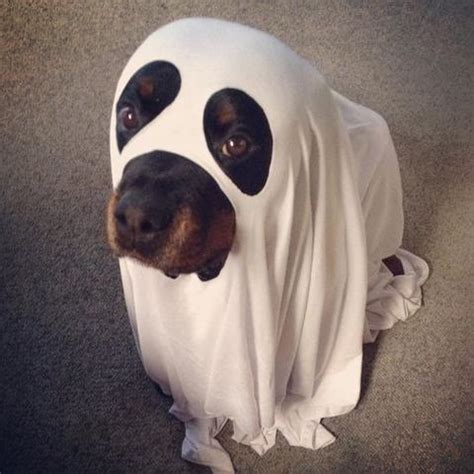 ghost costume for dogs treats happen tagged quot quot treats happen treats