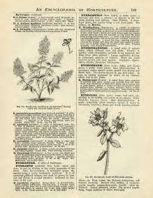 book pages free hydrangea gardening pages design shop