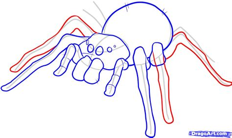 draw on how to draw an easy spider step by step bugs animals