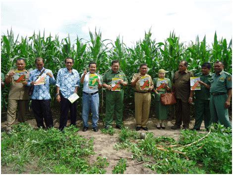 Bibit Kangkung Unggulan benih jagung pertiwi 2 varietas unggul benih pertiwi