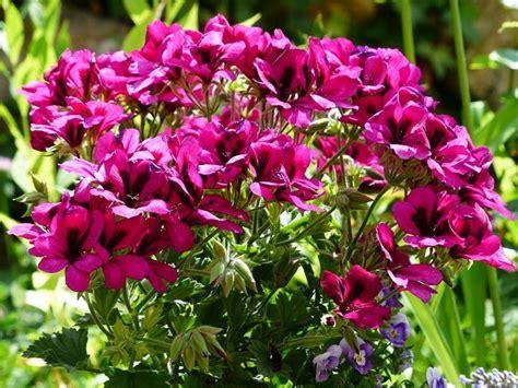 Tanaman Hias Euphorbia Bunga Kuning 10 tanaman hias bunga paling cantik dan lucu