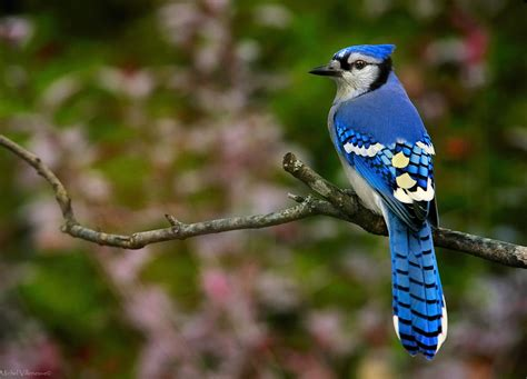 Blue Animals why is blue such a color among animals mnn